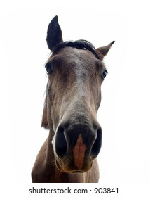 Face of horse