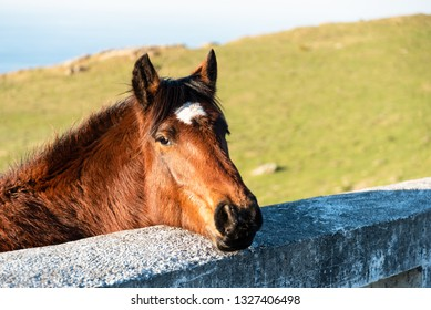 Face of a horse, brown color with black horsehair. Basque country.