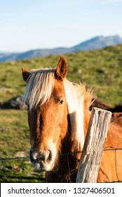 Face of a horse, brown color with blonde horsehair. Basque country.