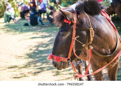 Face of horse, Thailand.