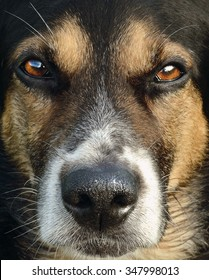 face of hunting dog