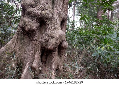 Face like ominous tree trunk in the wood.