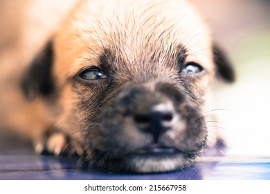 Face of new born puppy. Selective focus.