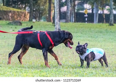 Face off between two dogs