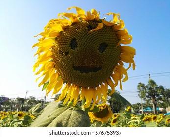 face on sunflower