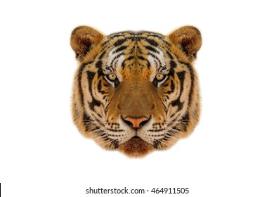 Face of a tiger, isolated on white background.