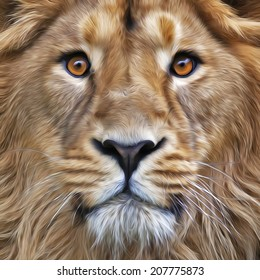 The face of young Asian lion with widely open eyes. The King of beasts, the biggest cat, looking straight into the camera. Illustration in oil painting style. Great for user pic, icon, label, tattoo.