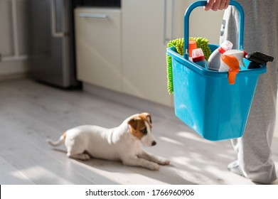 Faceless woman holds a blue bucket with bottles of detergent. The dog waits until the owner finishes home cleaning.