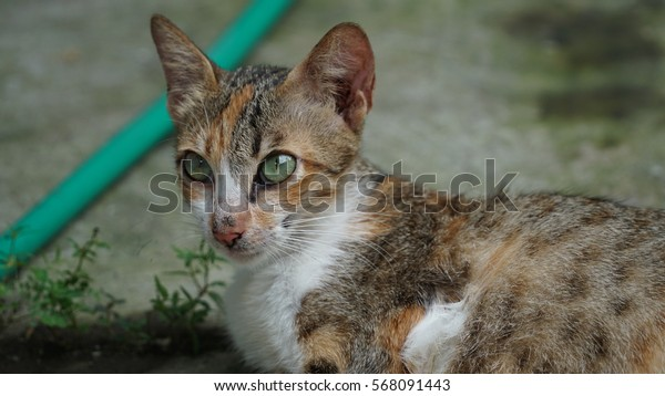 facial female cat who is serious