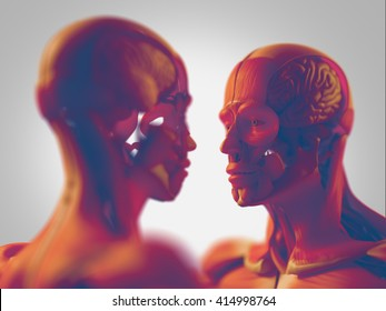 Facing human anatomy models, male and female. Woman and man looking at each other. 3D Illustration.