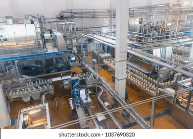 factory for the production of milk and cheese conveyor
