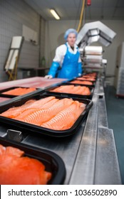 Factory of smoked salmon - a cut fish fillet is transferred to the welder.