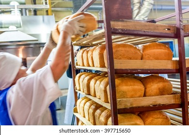 factory worker puts bread on the shelves
