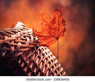 faded leaf closeup