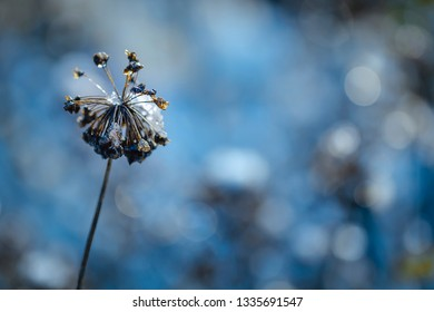 Faded plant with snow - mourning card