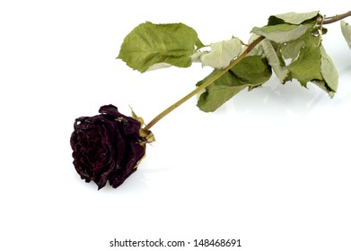 Faded rose isolated on white