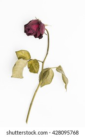 Faded Rose Images Stock Photos Vectors Shutterstock