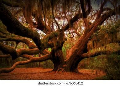 Faeries Meeting Place - Magnificent live oak near Beaufort, South Carolina