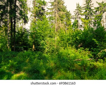 Faery summer sunny forest in August. Colorful and amazing wild flora of Europe