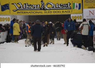 FAIRBANKS, AK - FEB 6: A crowd begins to gather as Abbie West's team, the first out of the chute in this year's Yukon Quest sled dog race, approaches the starting line Feb. 6, 2010 in Fairbanks, AK.