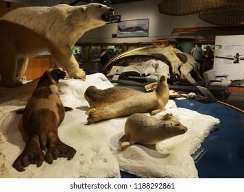 FAIRBANKS, ALASKA - AUGUST 7, 2018: University of Alaska, Museum of the North located on the UAF campus in Fairbanks, Alaska.
