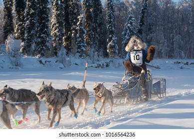 FAIRBANKS, ALASKA - FEBRUARY 3, 2018: Race veteran Paige Drobny, from Ester, AK, waives to race fans as she heads down the trail.