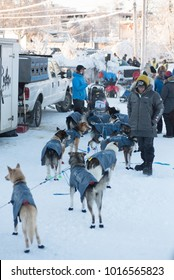 FAIRBANKS, ALASKA - FEBRUARY 3, 2018: Mushers prepare their dog teams for the start of the Yukon Quest.