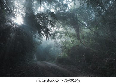 Fairlight from nature shines down from the top of the shining wood. , Travel ideas and adventure.