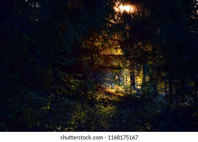 Fairy light in the forest somewhere on a trail in the mountains. Beautiful soft sunlight dropping on the wood's ground through trees leaves. Dreamy background or texture.