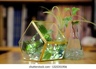 Terrarium Diy Images Stock Photos Vectors Shutterstock