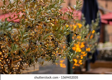 Fairy lights strung on a small shrub glowing deep yellow/orange with bokeh