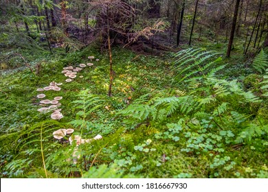 fairy ring in a forest at autumn time