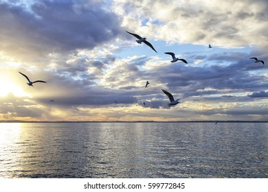 Fairy sunrise on the ocean with a beautiful blue cloudy sky and seagulls birds flying