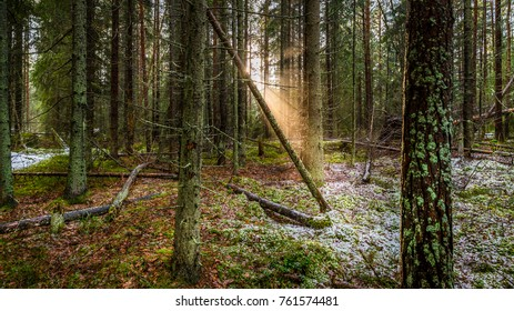Fairy tail forrest, sun rails coming inside forrest