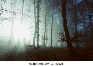 Fairy tale light behind the trees in foggy forest