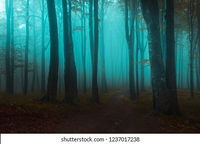 Fairy tale light in foggy forest. Blue mist through the trees