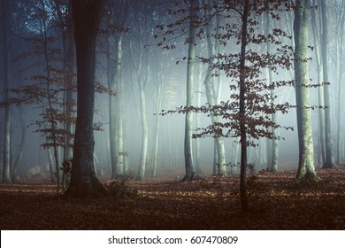 Fairy tale light in foggy forest