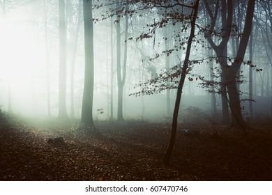 Fairy tale light in misty forest