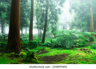 Fairy tale misty forest on the Azores, Portugal.