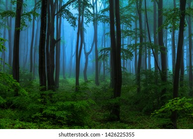 Fairy tale misty looking woods in a rainy day. Cold foggy morning in horror forest
