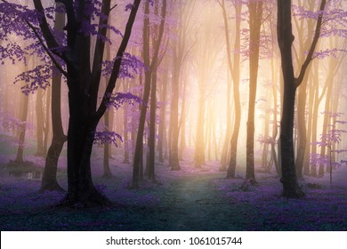 Fairy tale purple fog and leaves in mistic foggy forest trail