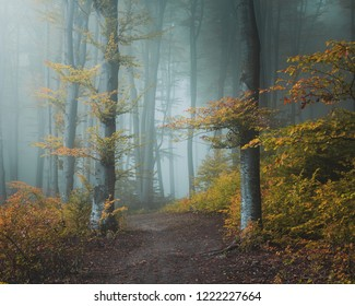 Fairy tale trail in mistic foggy forest. Light entering the woods