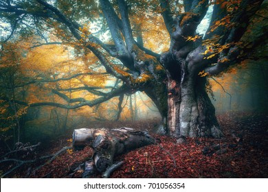 Old Magical Tree With Big Branches And Orange Leaves Mystical