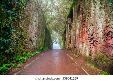 fairy tunnel in the woods of Rural Park Anaga in Tenerife, Canary Islands, Spain