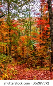 fairy view of red maple trees in Autumn in High Laurentians of Quebec, Canada