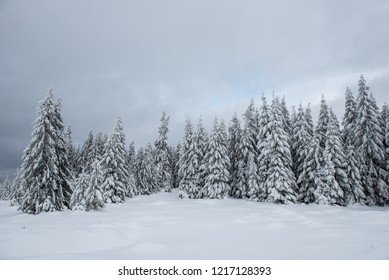 Fairy winter landscape with fir trees. Christmas greetings background with snowy forest in the mountains