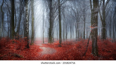 Fairytale autumn forest in fog with red leaves and frost in trees