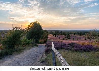 märchenhafte Herbstlandschaft mit violetten Blumen