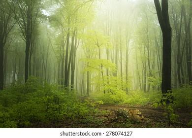 Fairytale light inside the forest