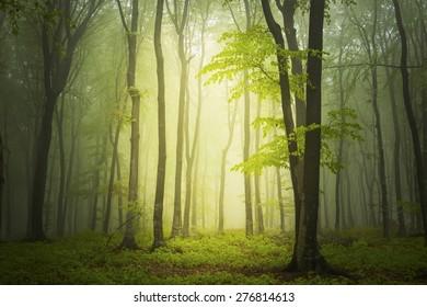 Fairytale light into the dark forest